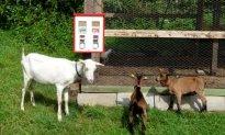 Tierfutterautomat Automat f. Fischfutter Wildfutter usw