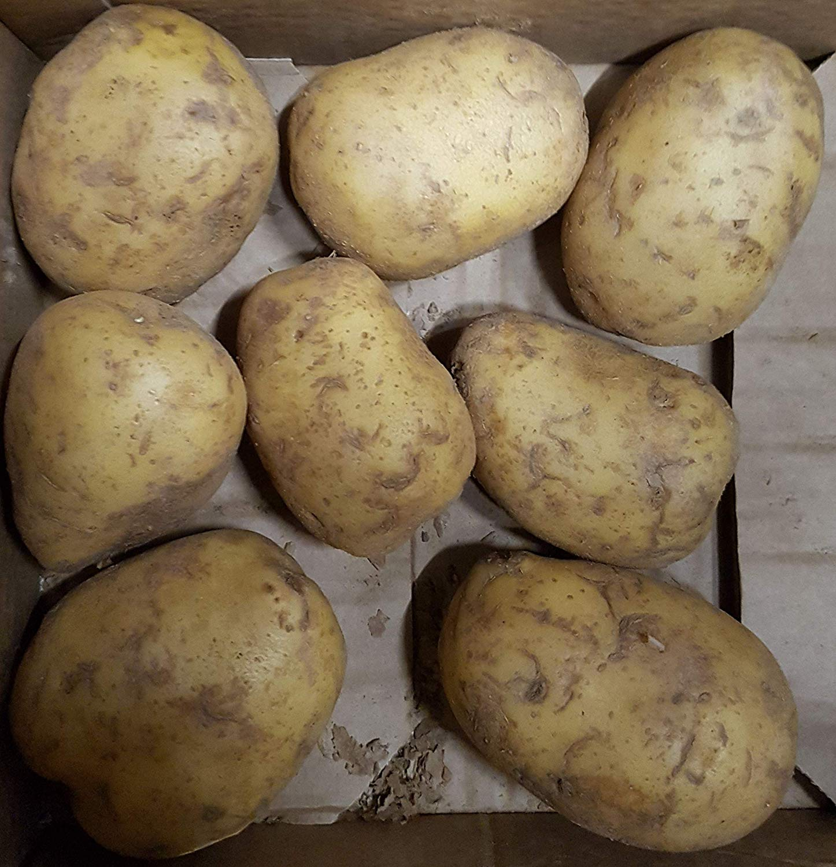 15KG Riesenkartoffeln XXL Griller Folienkartoffeln Grillkartoffeln