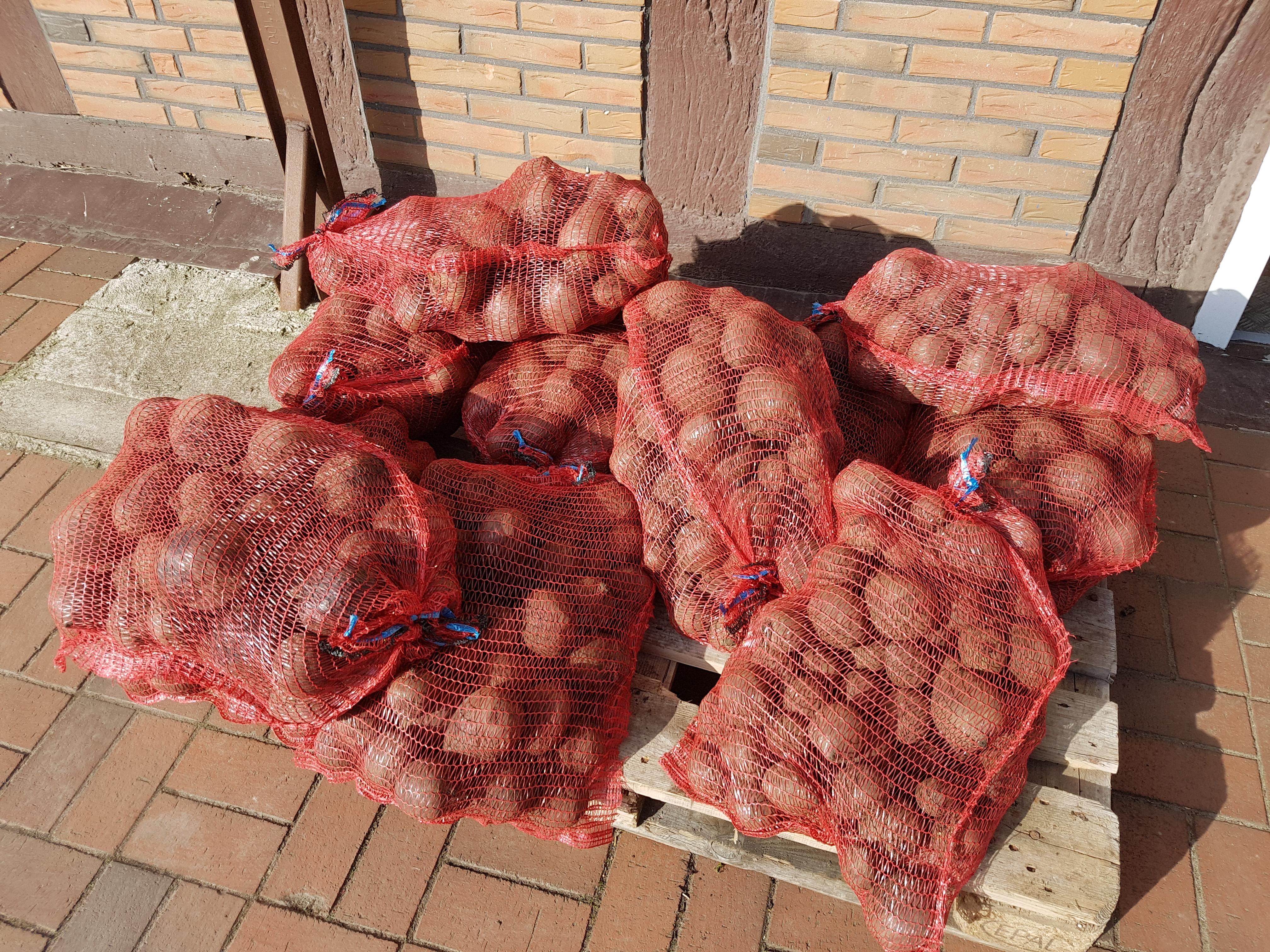 frische rote Bete Knollen 10kg